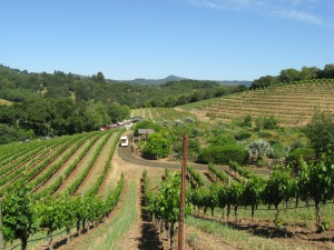 Vineyards at Benziger Family Winery