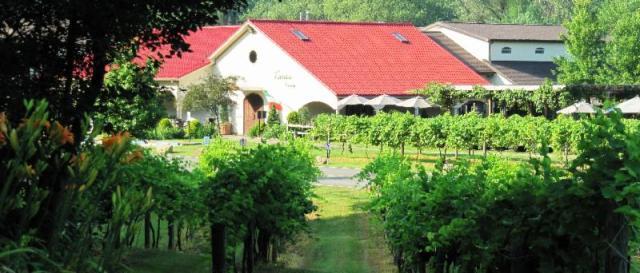 Photo Courtesy: Narcisi Winery