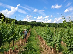 Briar Valley Vineyard  Photo Courtesy: Briar Valley Vineyard & Winery