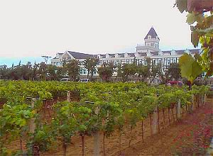 Chateau Changyu, Beiyujia Vineyards, Shandong, China